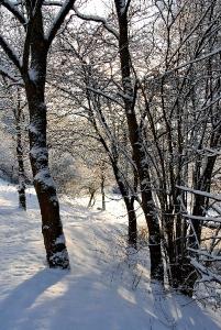 Fischbach tief verschneit_28