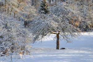 Fischbach tief verschneit_45