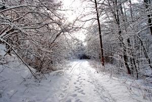 Fischbach tief verschneit_47
