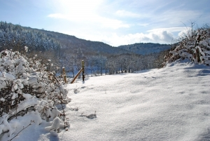 Fischbach tief verschneit_55