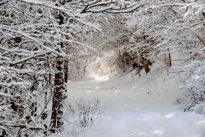 Fischbach tief verschneit_61