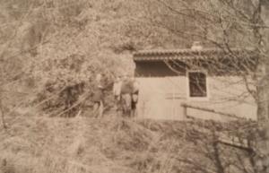 Angler Club 1967 eV
