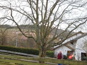 Vereine in Fischbach